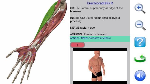 Descargar Apk Anatomía Última Aplicación Visual 2 Versión Para ...