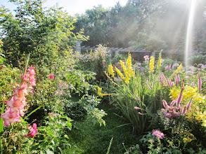 Photo: Gorgeous flower garden in the morning light at Wegerzyn Gardens in Dayton, Ohio.