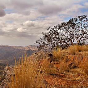 Natal Fig by Tracey Zettler - Landscapes Mountains & Hills ( clouds, hills, cliffs, tree, landscape )