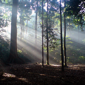Ray of Light by Yadi Setiadi - Instagram & Mobile Other ( forest, rol, save the forests worldwide, forests,  )