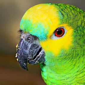 Butterfly Bird by René Wright - Animals Birds ( bird, colourful, parrot, eating, eye,  )