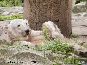 Photo: Knut wuenscht einen schoenen Sonntagmorgen :-)