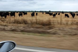 Photo: We had fun till the cows came home