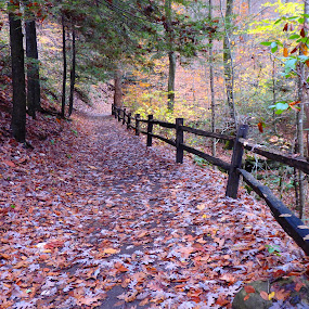 Meditating Pathway by Deegee English - Landscapes Forests ( fence, pathway, fall, forest, leaves,  )