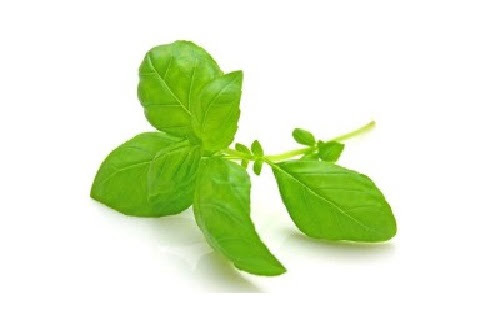 Researchers: Tulsi Plant Can Remove Fluoride From Drinking Water