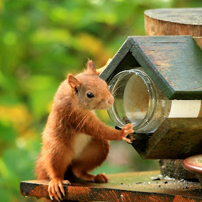 What's that...empty ??? by Bob Has - Animals Other ( holland, feeding, cute, squirrel, animal,  )