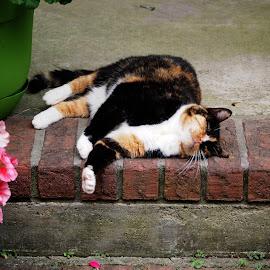 Happy cat by Brenda Shoemake - Animals - Cats Portraits
