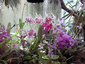 Photo: Yet more orchids.