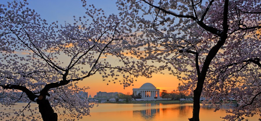 Sun-up at the Tidal Basin by David Davidson - Landscapes Waterscapes