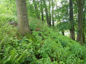Photo: Haldička při okraji lesa.
