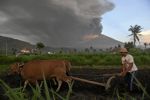 A farmer ploughs his field as Mount Agung erupts in the background, in Culik Village, Karangasem, Bali, Indonesia, on November 26 2017.Picture: ANTARA FOTO/NYOMAN BUDHIANA VIA REUTERS
