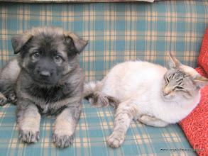 Photo: Aiki als pup met onze Sinjo samen
