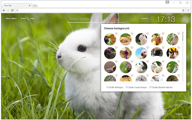 Cute Bunny Rabbit Wallpaper Hd New Tab