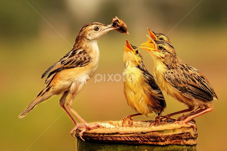 Feed Delivery  by Husada Loy - Animals Birds