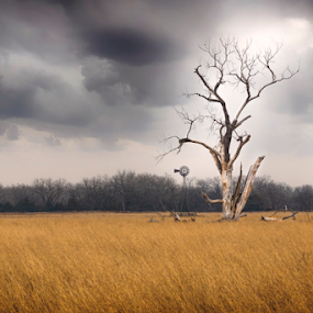 Weathering the Storm by Christopher Pischel - Landscapes Prairies, Meadows & Fields ( field, isolated, tree, loneliness, grass, cloudy, windmill )
