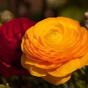 by Raineir Cabotaje - Nature Up Close Flowers - 2011-2013