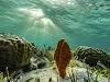 Top. Dive Sites, Kri Island, Raja Ampat, Papua. Coral around Kri Island