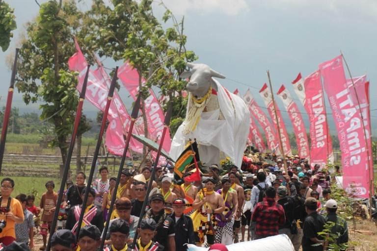 Ribuan Pengunjung Saksikan Puncak Upacara Ritual Kebo Ketan