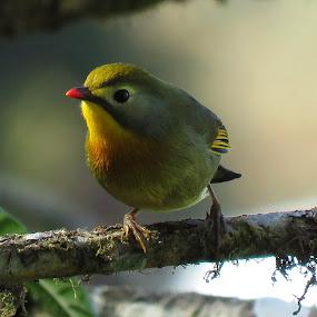 Hello.... by Asim Mandal - Animals Birds