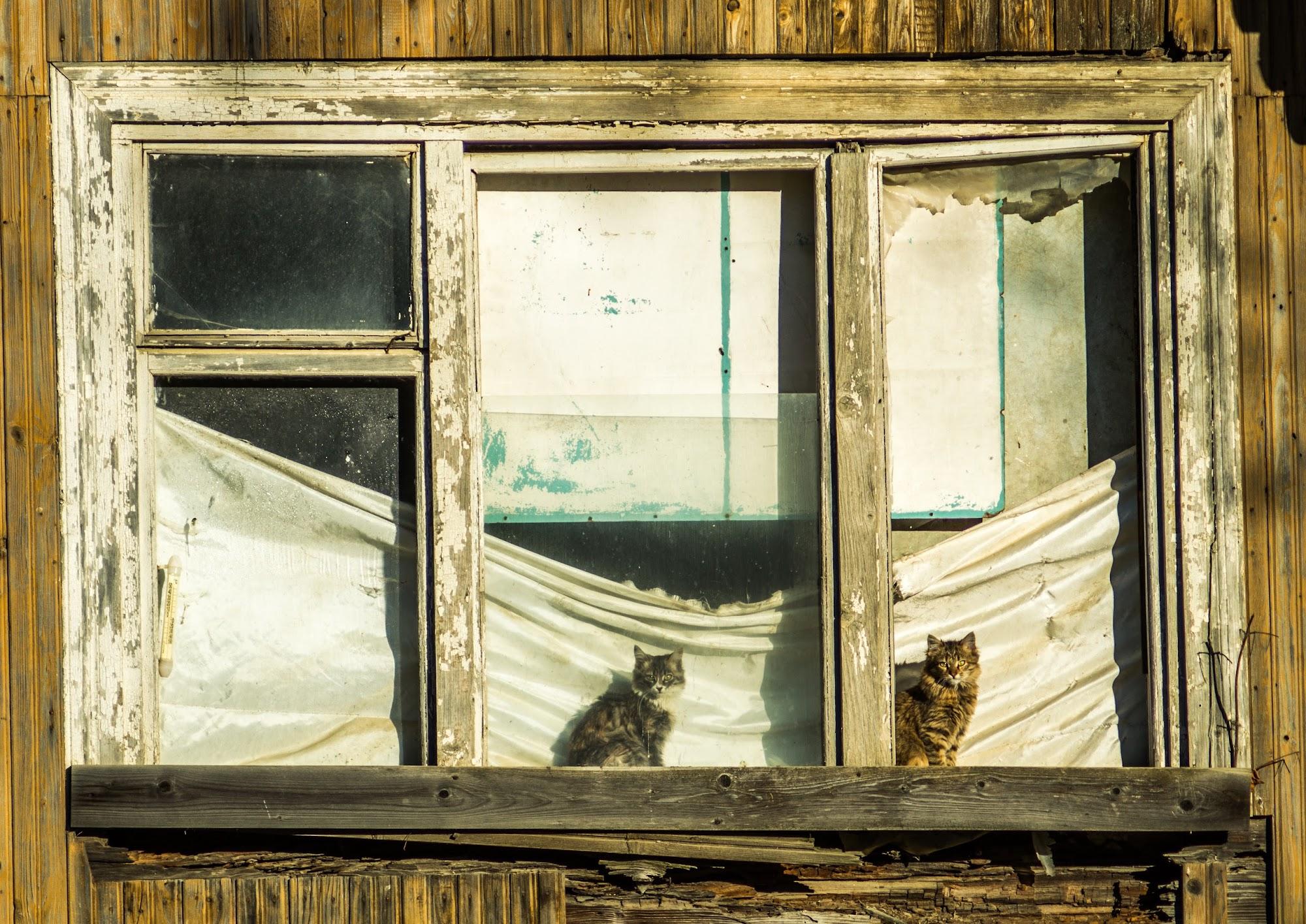 Гуртожиток лісорубів, коти