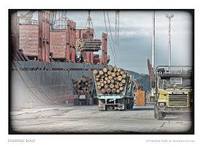 Photo: Loading Logs