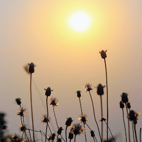 Sunset with Flower by Abhisek Datta - Landscapes Sunsets & Sunrises ( sunsets, flowers )
