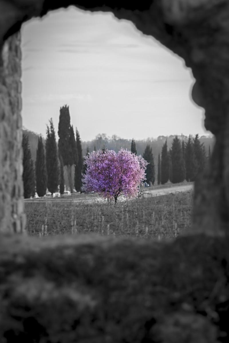 L'albero dell'Amore di Alessandro Zaniboni Ph
