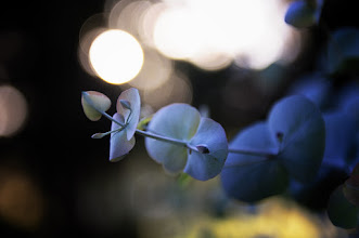 Photo: a shade of green in daylight, the night brings out her true colors