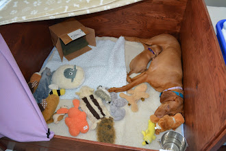 Photo: Surprised there is room in the whelping box for Mom and Akela