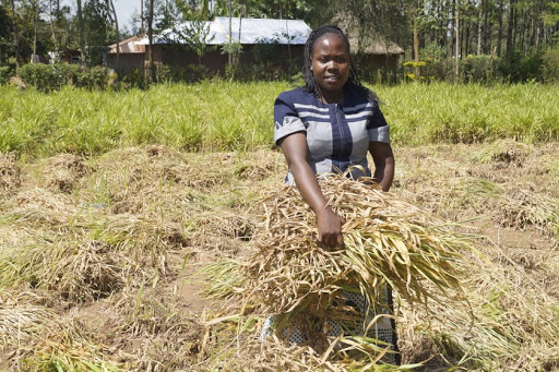Family Bank partners with USAID project to finance agribusinesses