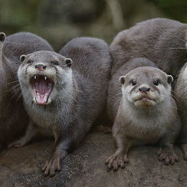 The Gang by Joe Ehlen - Animals Other Mammals ( rock, gang, six, otters, shout )