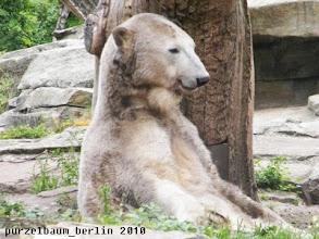 Photo: Ein hochzufriedener Knut :-)