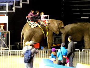 Photo: Elephant rides