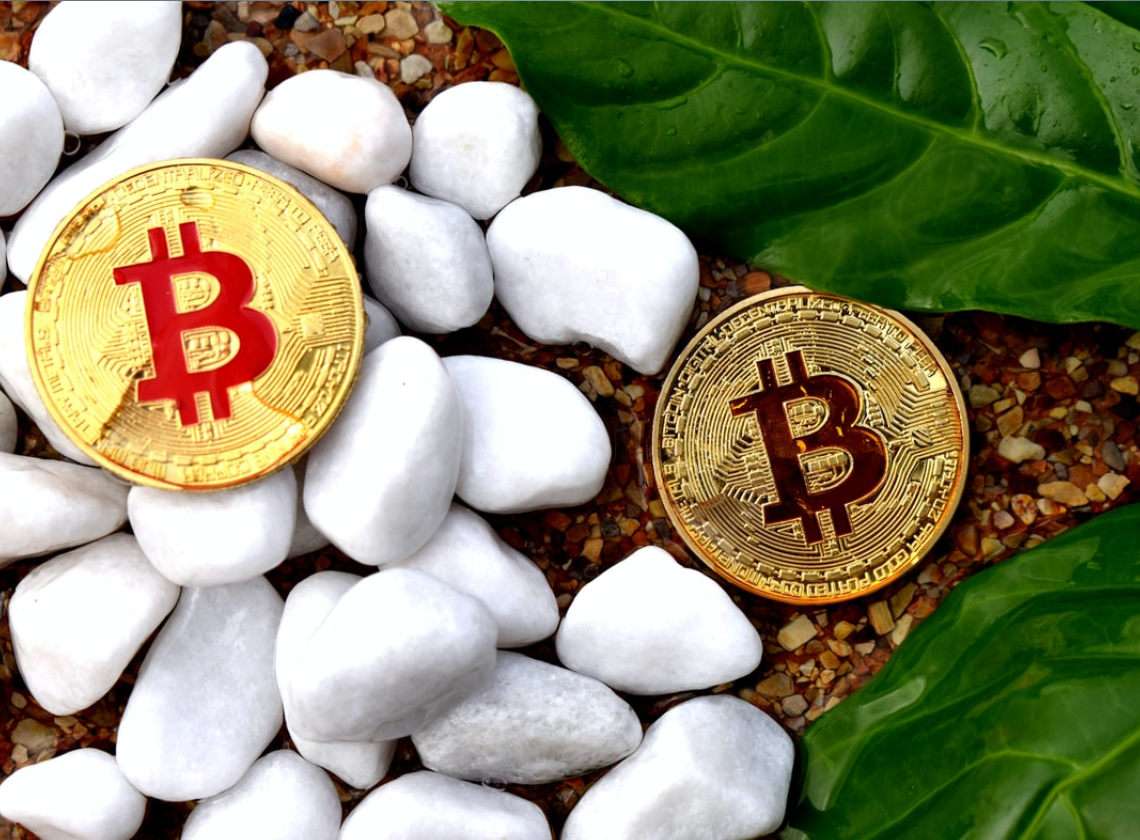 Bitcoin vs Bitcoin Cash: Which performs better? 5