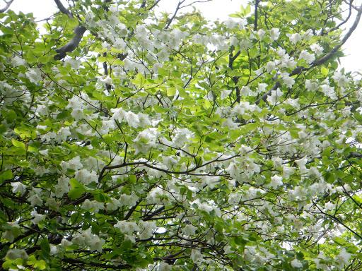 花つきの良い木も