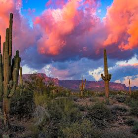 RonMeyers_ArizonaShots-31.jpg