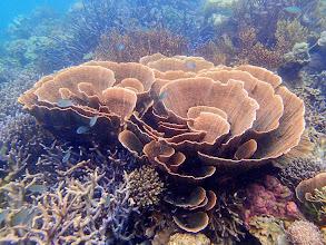 Photo: Lusong Island, Coral Garden Reef, Palawan, Philippines.