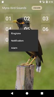 Myna Bird Sound Ringtones - náhled