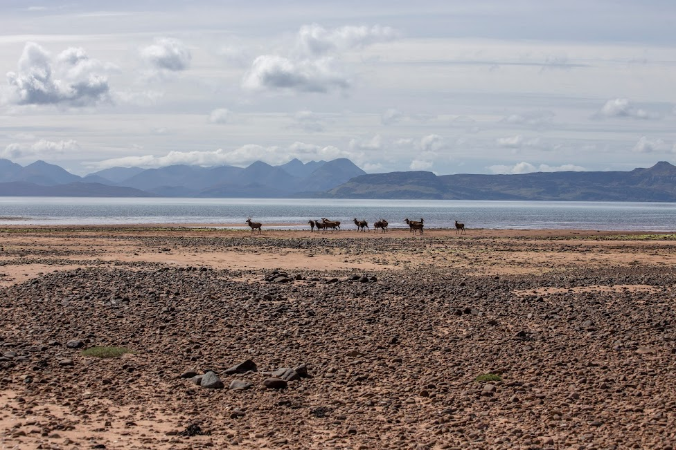 Szkocja, North Coast 500, Appelcross