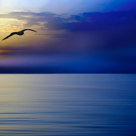 fly away by Georgios Kalogeropoulos - Digital Art Places ( sky, seascape, blue, sunset, bird, sea )