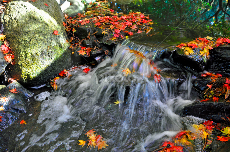 Black Water  by Keith Sutherland - Nature Up Close Water ( leaves water red flowing stream black )