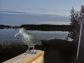 Photo: Så här slipper man fågelskit på altanen. Ljust nästan hela natten här.