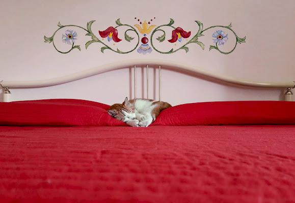 Stile...gatto di Marlak