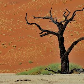 Red dunes by Tomasz Budziak - Landscapes Deserts ( orange, dunes, desert, africa, namibia,  )