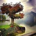 300 Free Autumn Tree Pictures