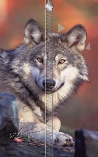玩個人化App|狼 ジッパー画面ロック免費|APP試玩