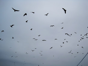Photo: Day 3 - Scads of pelagic birds attracted to our  boat by bait thrown off the back