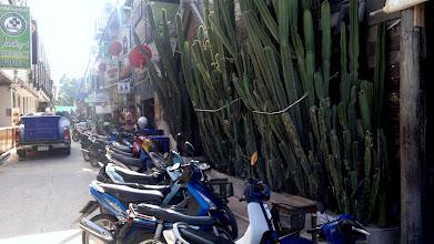 Photo: The famous Cactus Bar at the Full Moon beach.