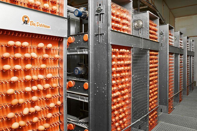 kiaušinių surinkimo sistema
