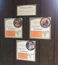 Photo: info about lemurs
